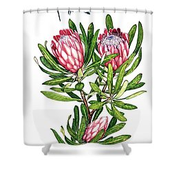 Shower Curtain featuring the painting Sugarbush And The Humming Bird by Heidi Kriel