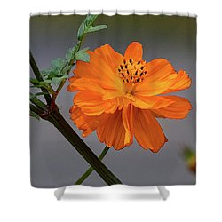 Sulfur Cosmos Shower Curtain