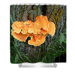 Sulfur Shelf Fungus On A Tree Shower Curtain
