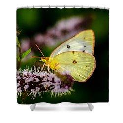 Sulphur Butterfly Shower Curtain