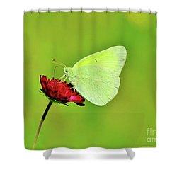 Sulphur Butterfly On Knautia Shower Curtain