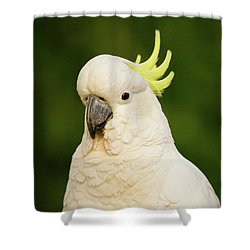 Sulphur Crested Cockatoo Shower Curtain by Craig Dingle