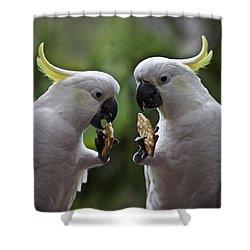 Sulphur Crested Cockatoo Pair Shower Curtain by Avalon Fine Art Photography