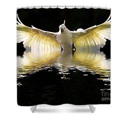 Sulphur Crested Cockatoo Rising Shower Curtain