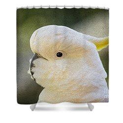 Sulphur Crested Cockatoo Shower Curtain by Avalon Fine Art Photography