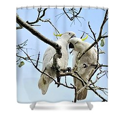 Sulphur Crested Cockatoos Shower Curtain by Kaye Menner