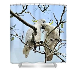 Sulphur Crested Cockatoos Shower Curtain