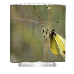Sulphur Dreams Shower Curtain