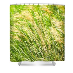 Summer Breeze In The Grass Shower Curtain by Susan Crossman Buscho