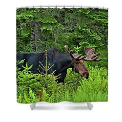 Summer Bull Shower Curtain
