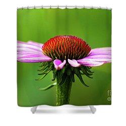 Summer Burst... Shower Curtain by Nina Stavlund