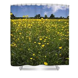 Summer Buttercups Shower Curtain by Meirion Matthias