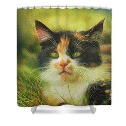 Shower Curtain featuring the photograph Summer Cat by Jutta Maria Pusl
