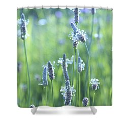 Summer Charm Shower Curtain by Aimelle