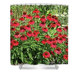 Summer Color Shower Curtain by Denise Romano