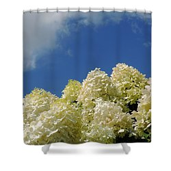 Summer Day Shower Curtain by Teresa Schomig
