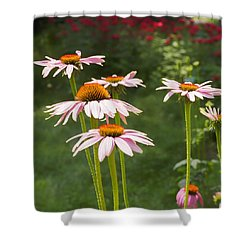 Summer Echinacea I Shower Curtain
