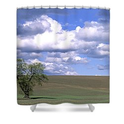 Summer Flack Tree Shower Curtain