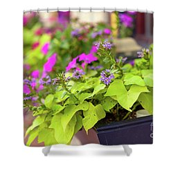 Summer Flowers In Window Box Shower Curtain