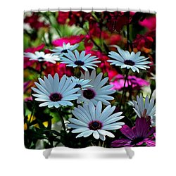 Summer Flowers Shower Curtain by Robert Meanor