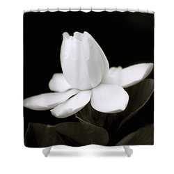 Summer Fragrance Shower Curtain by Holly Kempe