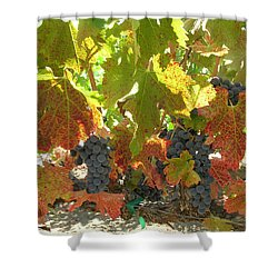 Shower Curtain featuring the photograph Summer Grapes by Bonnie Muir