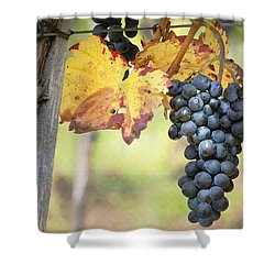 Summer Grapes Shower Curtain by Sharon Foster