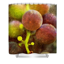 Shower Curtain featuring the photograph Summer Grapes by Tom Singleton