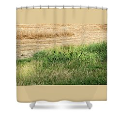 Summer Grasses -  Shower Curtain