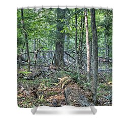 Summer In A Canadian Forest Shower Curtain