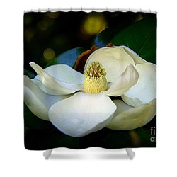 Shower Curtain featuring the photograph Summer Magnolia by Lisa L Silva