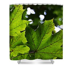 Summer Maple Leaves Shower Curtain