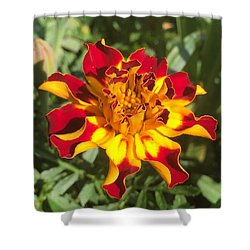 Summer Marigold Shower Curtain