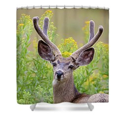 Summer Mule Deer Shower Curtain