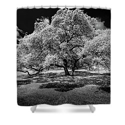 Shower Curtain featuring the photograph A Summer's Night by Darryl Dalton