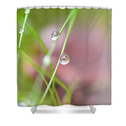 Summer Of Dreams Shower Curtain