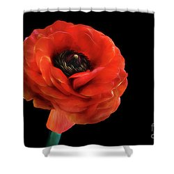 Shower Curtain featuring the photograph Summer Orange by Darren Fisher