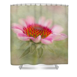 Summer Pink Echinacea Shower Curtain
