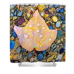 Summer Rain Leaf Shower Curtain
