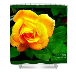 Shower Curtain featuring the photograph Summer Rose by Garnett Jaeger