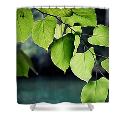 Summer Showers Shower Curtain by Robert Meanor