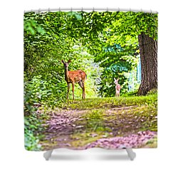 Summer Stroll Shower Curtain
