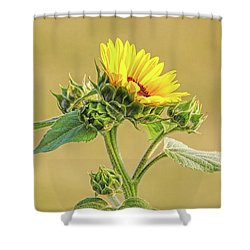 Shower Curtain featuring the photograph Summer Sunflower Floral by Jennie Marie Schell