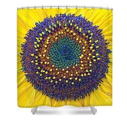 Summer Sunflower Shower Curtain by Todd Breitling