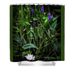 Shower Curtain featuring the photograph Summer Swamp 2017 by Bill Wakeley