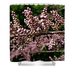 Shower Curtain featuring the photograph Summer Tamarisk 2 by Jean Bernard Roussilhe