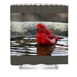 Summer Tanager In Bird Bath Shower Curtain