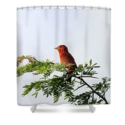Shower Curtain featuring the photograph Summer Tanager In Mesquite Scrub by Robert Frederick