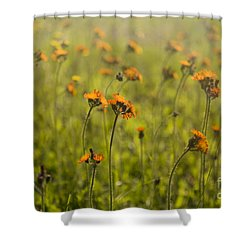 Summer Wildflowers Shower Curtain by Diane Diederich