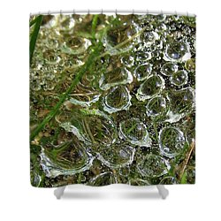 Summer's Freeze Shower Curtain